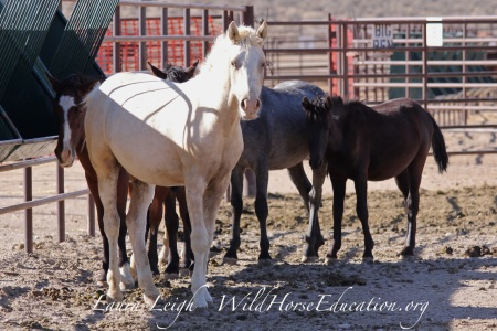 Weanling/yearlings for adoption