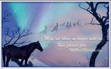 copyright Wild Horse Education, design by Laura Leigh