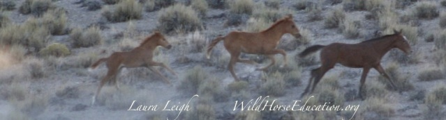 Triple B, foals run in the desert heat were among the first to die at Triple B in 2011