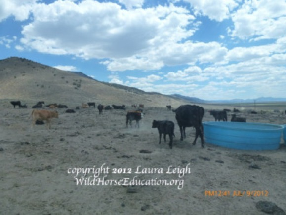 Water haul for livestock in the Diamond Complex prior to grazing restrictions being implemented
