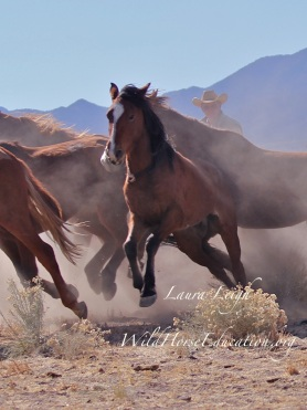 Wild horse released at Reveille after birth control treatment