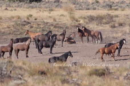 Rocky Hills HMA wild horses near Cadet Springs