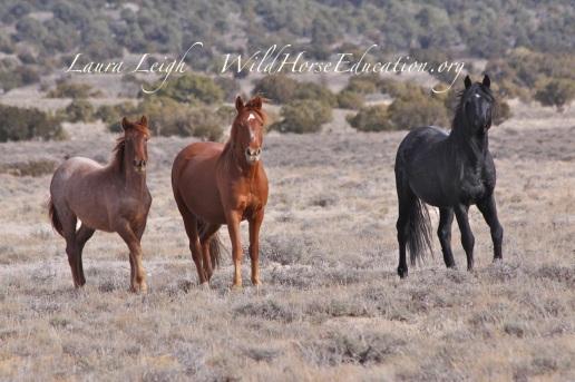 Winter 2014, Fish Creek wild horses