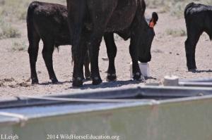 Trespass Livestock in Fish Creek 2014