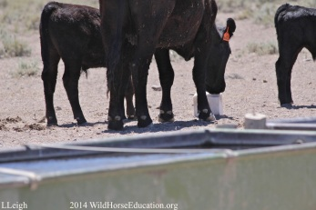 Trespass Livestock in Fish Creek 2014