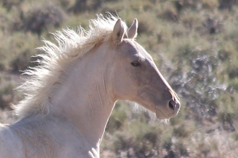 Summer 2014, the Fish Creek wild horses need an informed supportive advocacy