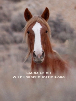 Humbolt wild horse, photo 1/16/2015