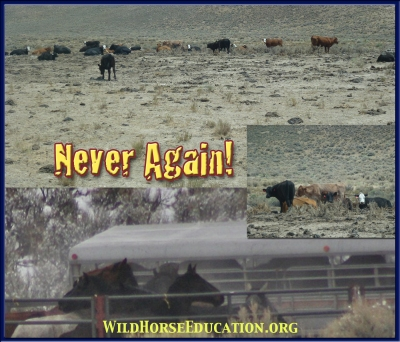 Images from an area of drought (Diamond) where livestock interests united against wild horses.