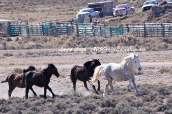 Fish Creek roundup, 2015