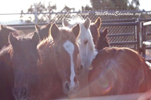Horses for Adoption event near Eureka Feb 28th