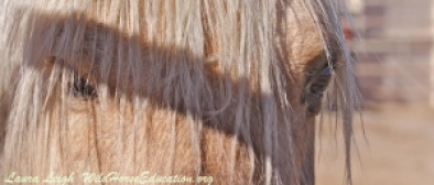 """""""Sarge,"""" beloved stallion of Fish Creek. We will NOT stop until he, and the herd , go home!"""