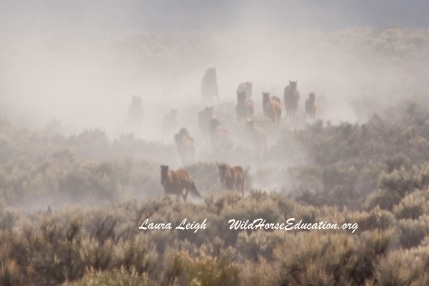 Wild horses have been stampeded and removed off of public land for decades to accommodate domestic livestock.