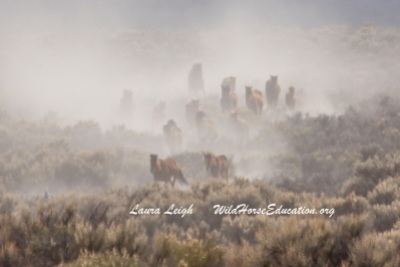 Little Fish Lake wild horse removal 2015 due to drought