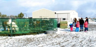 Trap site adoption of Fish Creek yearlings and a hard choice to make (photo Cathy Ceci)