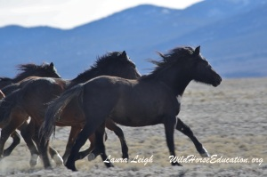 A win for Nevada's Wild Horses!