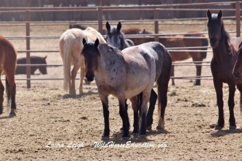 Fish Creek mares at Broken Arrow
