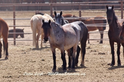 Fish Creek mares at Broken Arrow
