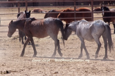 5 pregnant mares died at Broken Arrow from complications of foaling. These two older mares among them.