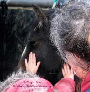 "Little hands get a first touch to their new ""wild horse"" family member"