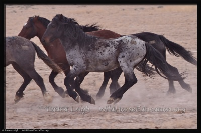 The release of wild horses back to Fish Creek has crossed over into the