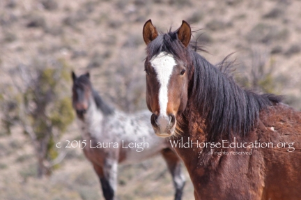 Help us work to keep wild horses and burros free from abuse, slaughter and extinction... and living free on the range