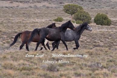 Some of Aubrey's mares