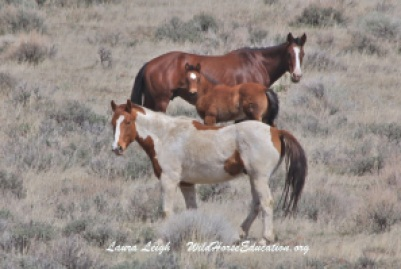Horses on Forest Service administered land in the proposed project area