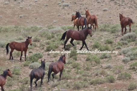 South Shoshone wild horse  area of