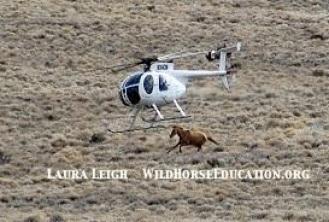 Antelope Complex