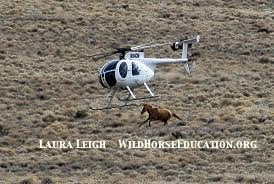 Did the wild horses in Unbranded experience something like this? We are never told