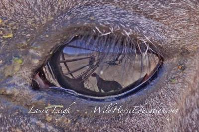 How Do Wild Horses See?