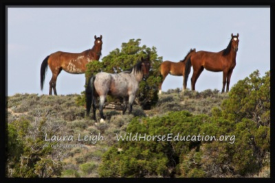 Stallion and his family free on the range. Join us to fight to keep them safe and free!
