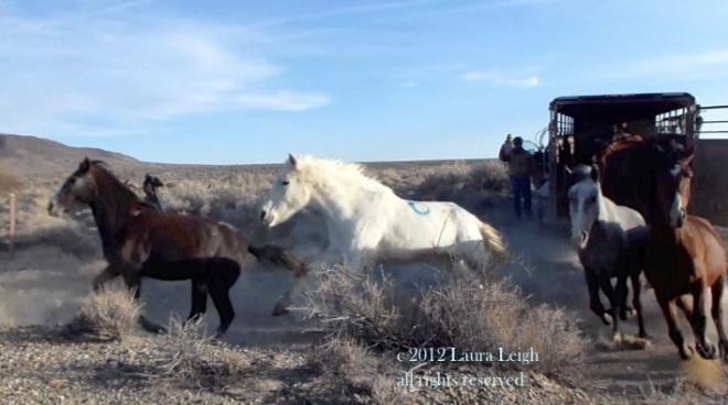 Stone Cabin release, February 2012