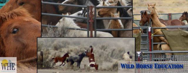 Multiple court rulings were gained against inappropriate conduct at roundups, while BLM insisted everything was