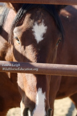 #9989, Second time on the internet adoption. No bids. This horse is one we would bid on if we could. This boy is a star.