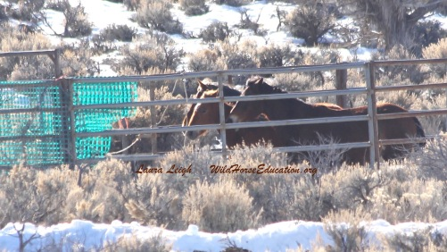"Not one wild horse hit the trap ""wet."""