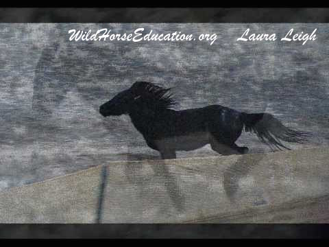 Little black horse fleeing trap (still free) from Antelope.