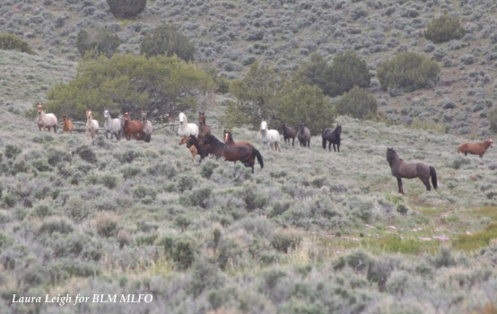 Identifying areas for potential fertility control with BLM