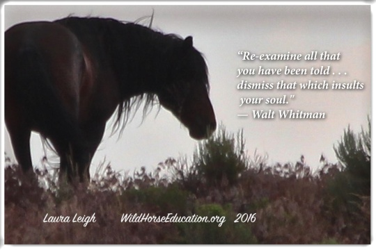 Nerd Notes for the Pragmatic Advocate – Wild Horse Education