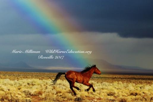 1 Rainbow.JPG