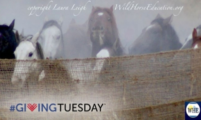 Cyber Monday Givingtuesday Wild Horse Education