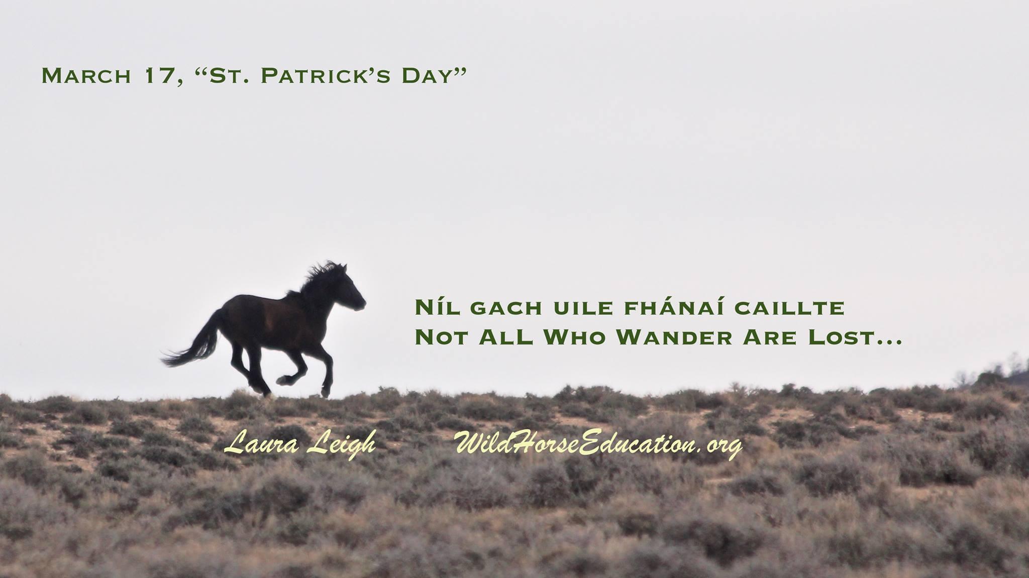 Celtic Mythology and the Horse – Wild Horse Education