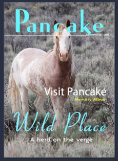 Until August 31 a generous donor offering to match your contributions to 5K. We created a fast photo album on Pancake... hopefully these memories will not be all that is left. Thank you for helping us fight back.