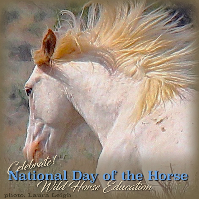 DayofHorse